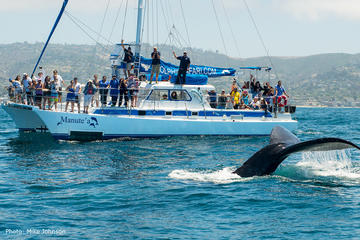 Book Dana Point Whale Watching and Dolphin Watching Eco-Safari on Viator