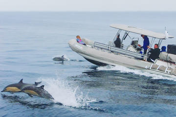 High Speed Zodiac Whale Watching...