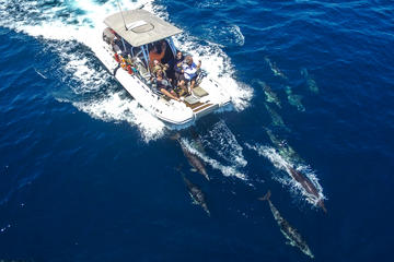 Book High Speed Zodiac Whale Watching Safari from Dana Point on Viator