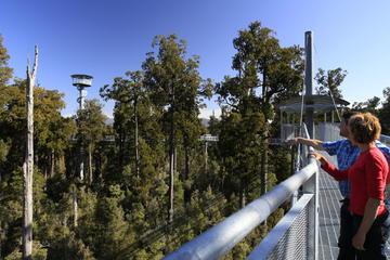 Westküste Baum Top Walk Experience