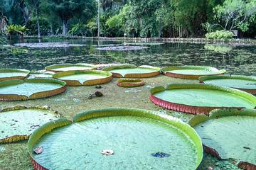 Botanical Garden, a Place of Science, Culture, and Leasure