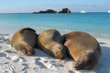 Galapagos Island 4 Days - 2 Islands : From Sand to Volcanoes