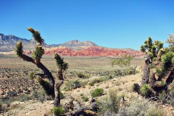 Guided Tour of Red Rock Canyon from Las Vegas