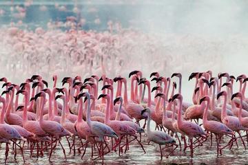 1 day lake Nakuru