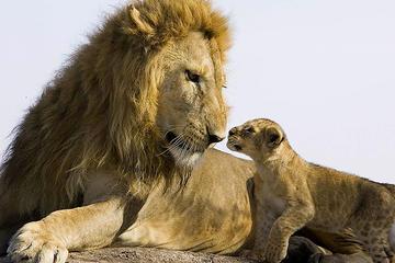 Nairobi highlights safari