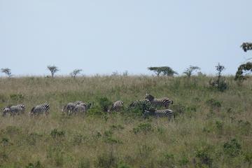 Nairobi National Park, Elephant Orphanage, Giraffe Center, Karen Blixen Museum and Bomas of Kenya Day Tour