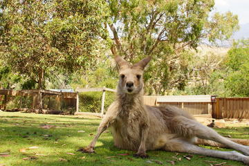 Bonorong Wildlife Sanctuary: Half-Day...