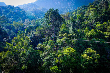 Guided Jungle Flight Zipline Tour on...
