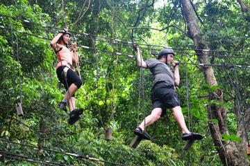 Combo Tijuca Forest Tour and Tree Canopy Ride for Small Groups