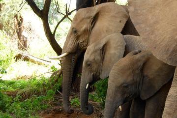 10 Days Kenya Private Luxury Wildlife Safari