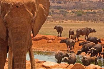 2days Amboseli Overnight Safari