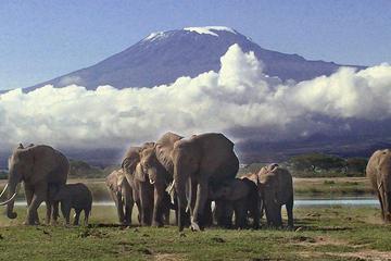 3 Days Amboseli Camping Safari All Inclusive