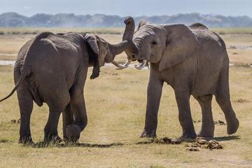 5Days Affordable Wildlife Safari in Kenya