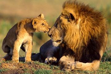 Meilleur safari en famille de 9 jours...