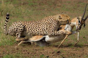 9-Days Discover Kenya Safaris
