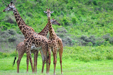 Guided Day Tour To Arusha National...
