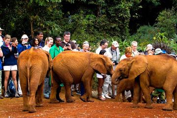 Nairobi Half Day Tour to David Sheldrick Elephant Orphanage