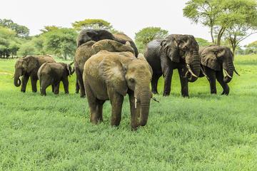 Tarangire National Park Guided Day...