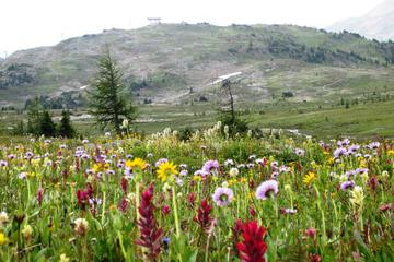Sunshine Meadows Vistas -  Easy Hike - Mondays and Saturdays