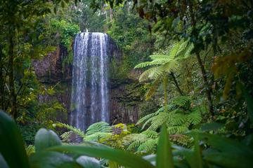 Atherton Tablelands Waterfalls and Rainforest Wildlife Tour from Cairns