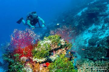 Scuba Diving Tours at Koh Tao