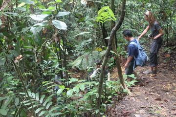 Private Tour: Half Day Bukit Lawang Practice Trek Tour
