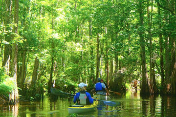 2-Hour Cypress Forest Guided Kayak...