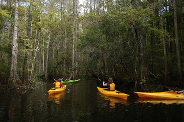 The Top Things To Do In Everglades National Park Must - The florida kayaking guide 10 must see spots for paddling
