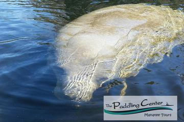 Day Trip Manatee Encounter - Kayaking Tour at Blue Springs State Park near Orange City, Florida