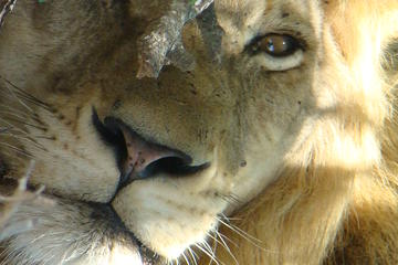 Kruger National Park Private Guided ...