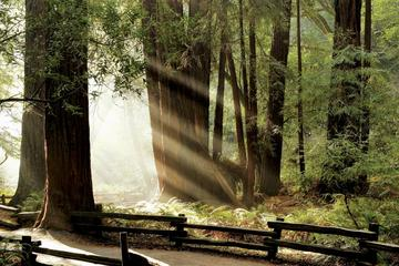Private Muir Woods and Napa Wine Tour...