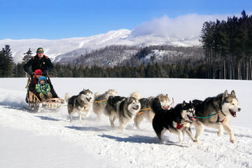 Book Dogsled Adventure in Mont-Tremblant on Viator