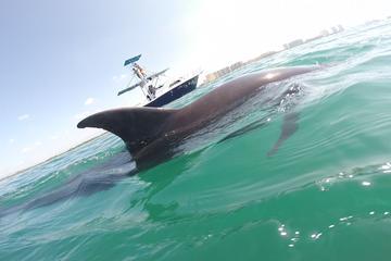 Private Wild Dolphin Encounter in Puerto Vallarta