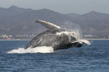 Small-Group Whale Watching Tour in Puerto Vallarta