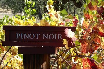 Book Russian River Valley Wine Tasting Bike Tour on Viator
