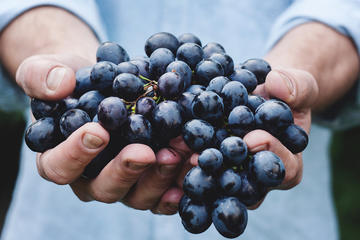 Athens Private Wine Tasting Tour - Dionysian Grapes