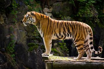 6-Day Private Golden Triangle: Agra Jaipur and Ranthambore from New Delhi