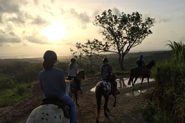 Horse Back Riding Tour
