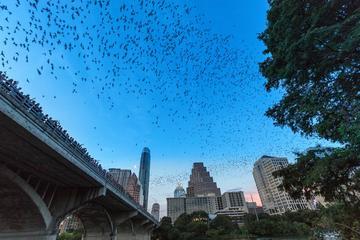 Congress Avenue Bat Bridge Kayak Tour in Austin