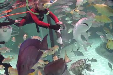 Day Trip from Key West to Florida Keys Aquarium Encounters