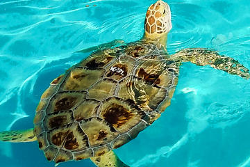 Turtle Hospital and Lower Florida...