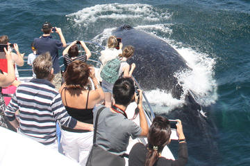 Sea World Whale Watch Cruise on the Gold Coast
