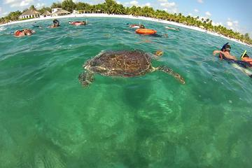PRIVATE TOUR to Akumal Bay Sea Turtle Snorkeling and Cenote
