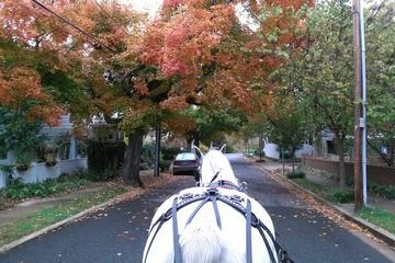 Book Fredericksburg After Hour Private Horse and Carriage Ride on Viator