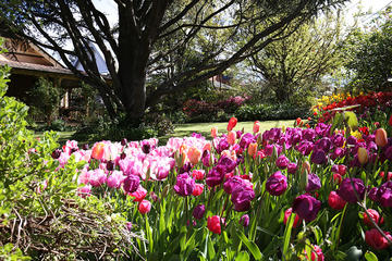 Spring Gardens in the Blue Mountains Private Tour - Only Available Sept - Oct!