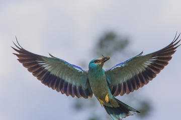 Grand tour: birds and wildlife (guaranteed departure)