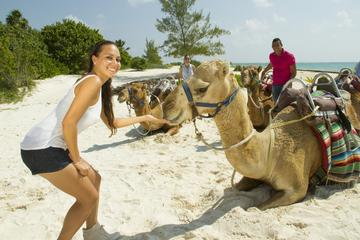 Camel Ride Tour from Cancun and Riviera Maya