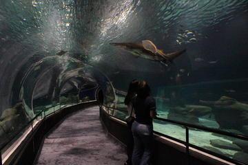 アクアリオ水族館への開館前入場券