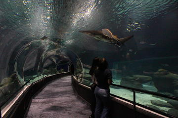 Entrada a primera hora para el acuario AquaRio