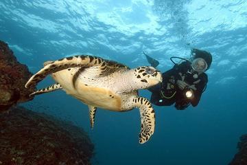 Full-Day Phi Phi Islands Scuba Diving Tour from Phuket